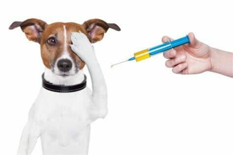 как сделать укол собаке правильно