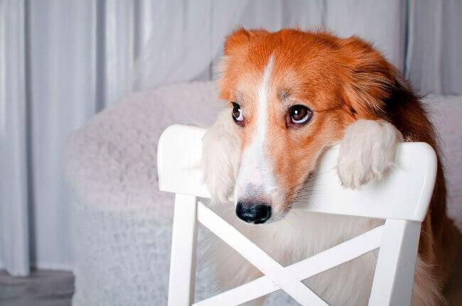 основные причины отказа собаки от еды