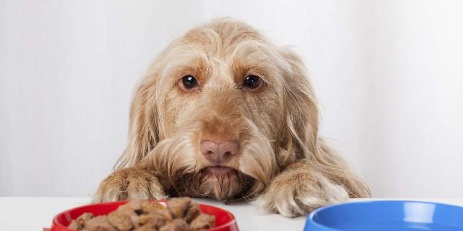 сколько может не есть собака