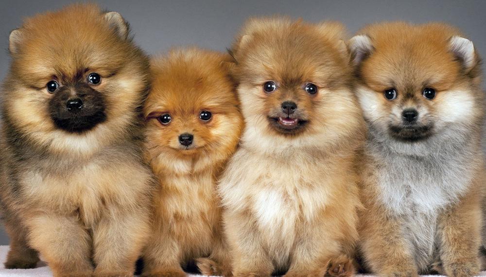 дорогого собаки маленьких пород и картинка и название можно гулять, ездить