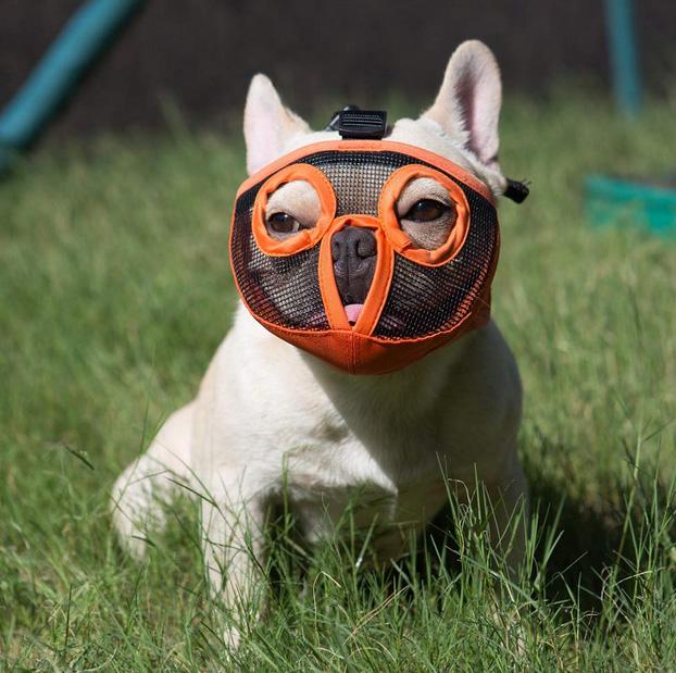 Намордник для мопса Short Snout Dog Muzzles