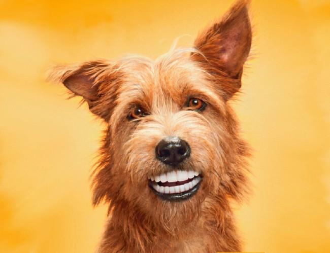 уход за зубами собаки