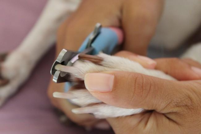 как часто подстригать когти собаке