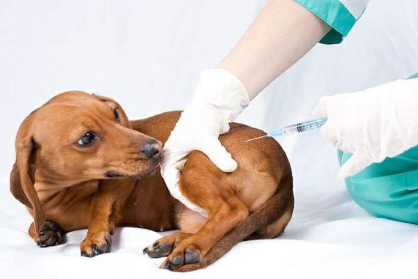 схема вакцинации собак
