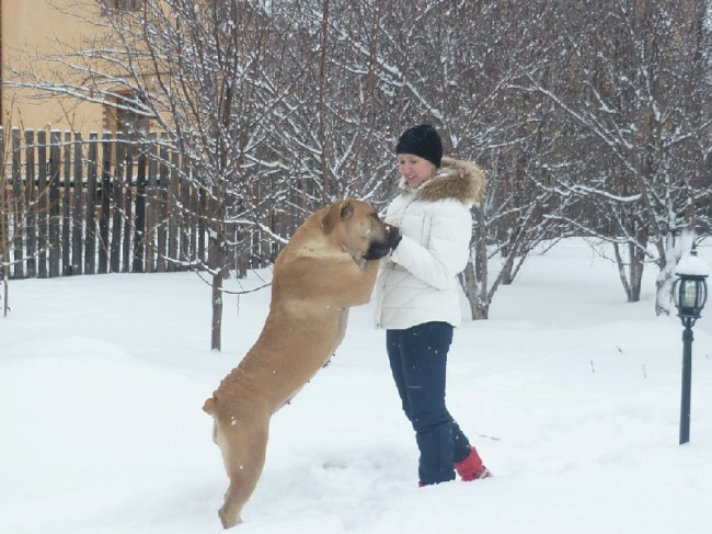 порода собак бурбуль