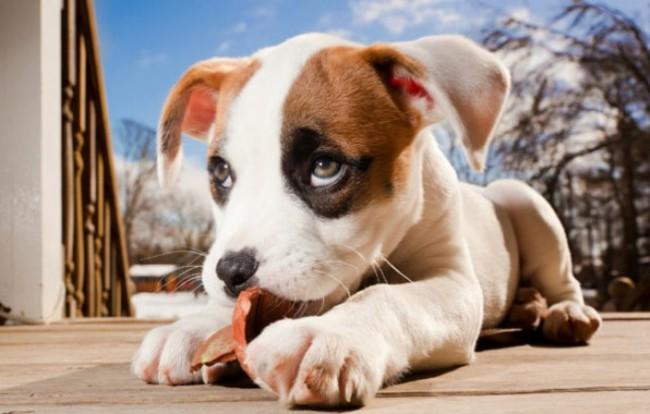 сколько раз в день кормить щенка