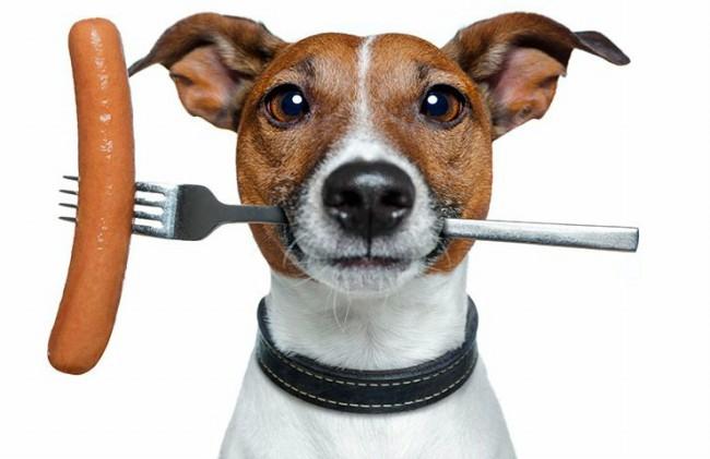 сколько раз кормить собаку после года