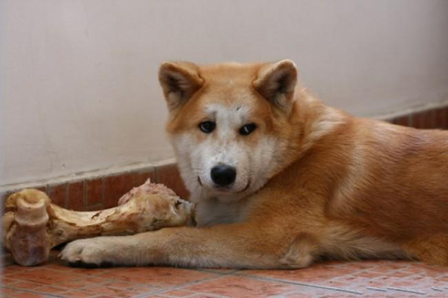можно ли давать собаке кости индейки