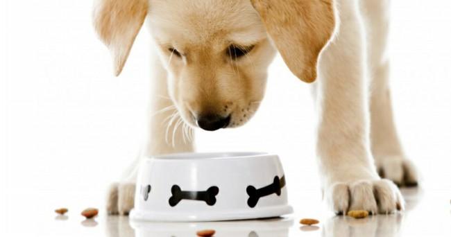 сколько раз в день нужно кормить собаку
