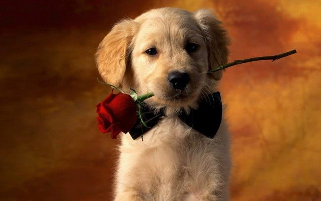 красивые имена и клички для собак мальчика и девочки