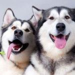клички для собак мальчиков фото