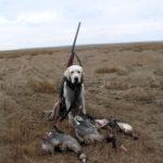 охотничьи собаки фото