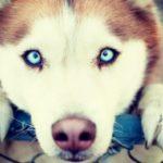 Северные породы собак