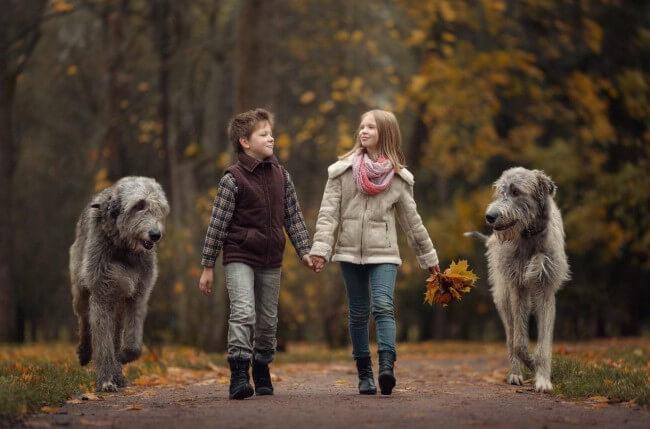 ирландский волкодав и дети