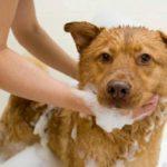 как избавиться от власоедов у собак