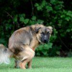 понос у собак и щенков - причины и лечение