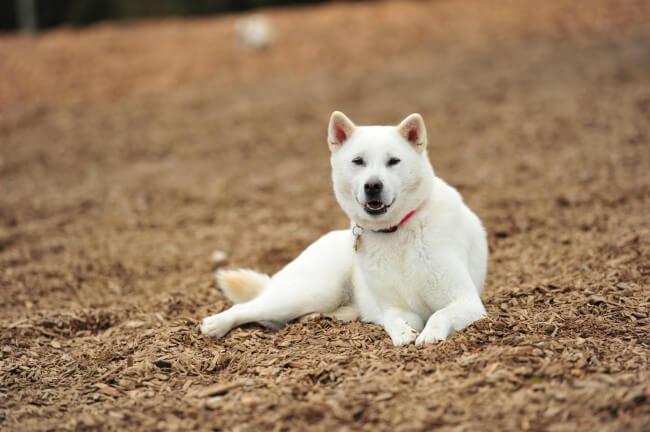 Белые собаки фото