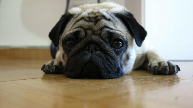 причины и лечение рвоты у собак