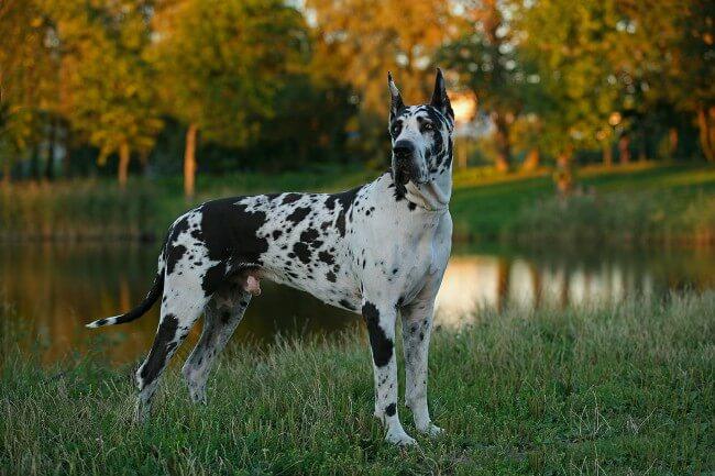 Какая самая красивая порода собак