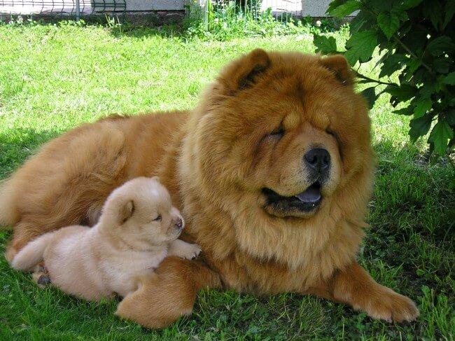Какая самая красивая порода собак в мире