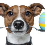 сколько стоит кастрация собак